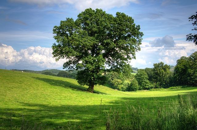 Trees Bring Healing
